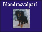 Blandrasvalpar.se