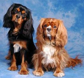hundar som väger under 10 kg