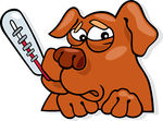 hundsjukdomar